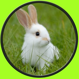 exceptionnal rabbits for kids no ads