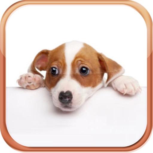 Dog Breeds Trivia Quizzes