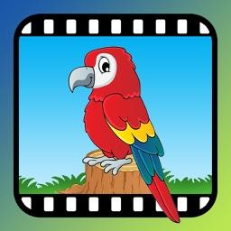 Video Touch - Birds