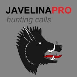 REAL Javelina Calls -- Javelina Sounds to use as Hunting Calls