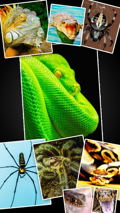 ヘビ トカゲ クモ綱 ワニ - 動物 爬虫類 壁紙 Wallpapersのおすすめ画像1