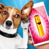 犬笛 - 超音波。超音波ホイッスルとあなたの犬を訓練