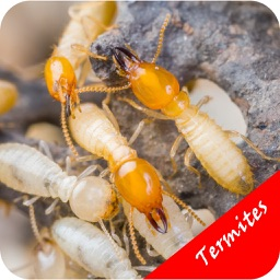 How To Get Rid Of Termites - Pest Control Services