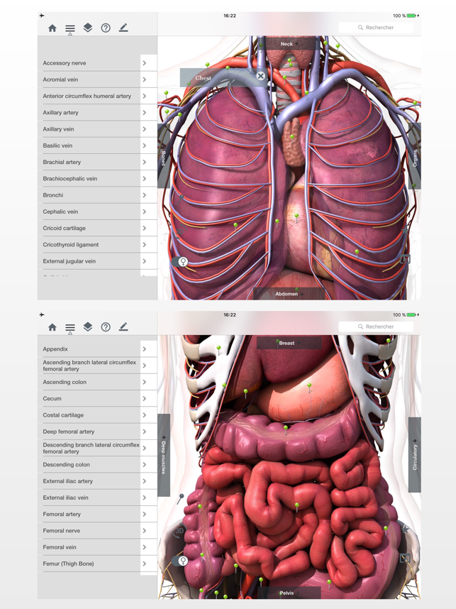 Anatomy Easy Learn Muscles Skeleton And Bones On The App Store