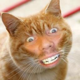 Cat Me!