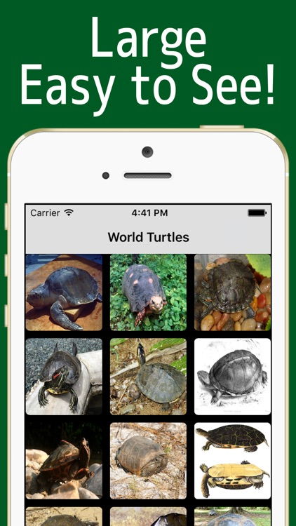 World Turtles!