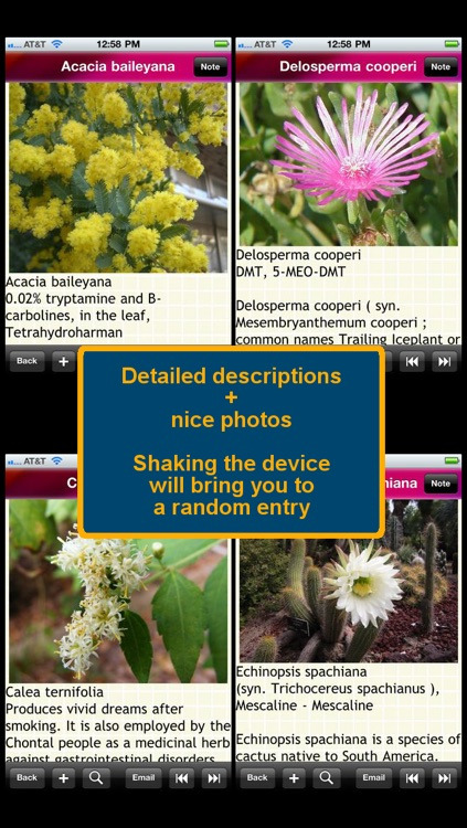Psychoactive Plants and Fungi
