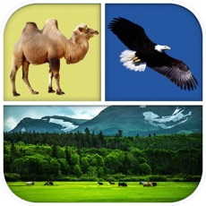 Activities of Animal Quiz - Which animal is that?