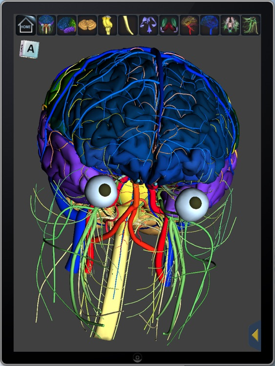 The Complete Human Brain PRO screenshot-0