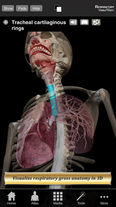 Respiratory Anatomy Atlas: Essential Reference for Students and Healthcare Professionalsのおすすめ画像1