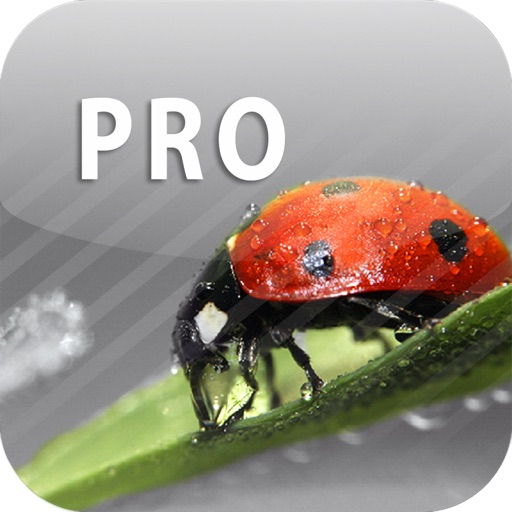 ColorUp Pro - Color Paint Editor