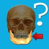 Anatomía Concurso