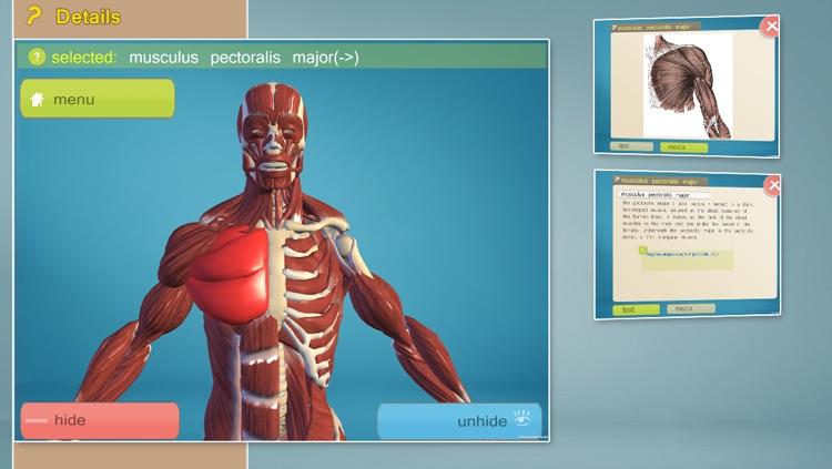 Easy Anatomy 3D
