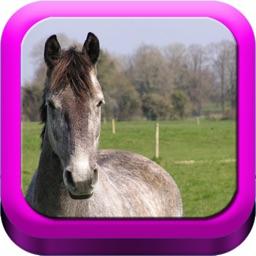 Good Horsemanship - Equestrian Riding, Groundwork, Dressage and Jumping