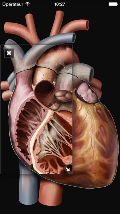 Виртуальное человеческое тело screenshot-4