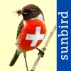 All birds Switzerland - a complete field guide to all the birds ever recorded in Switzerland