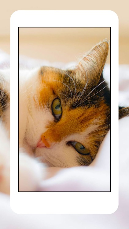 Cats & Kittens Wallpapers - Cute Animal Backgrounds and Cat Images screenshot-3