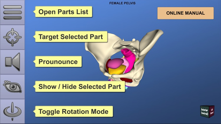 Understanding Female Pelvic Anatomy in 3D