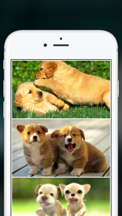 Cute Puppies Wallpapers  - dog pictures for free! screenshot four