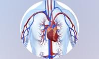Human Body Database +