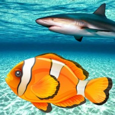 Activities of Real Fish Simulator