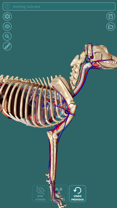 Visual Anatomy - Canine screenshot two