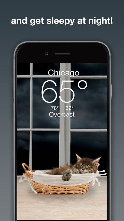 Weather Kitty screenshot-2
