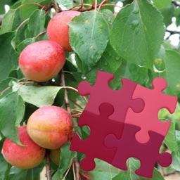 Fruits Puzzles Box