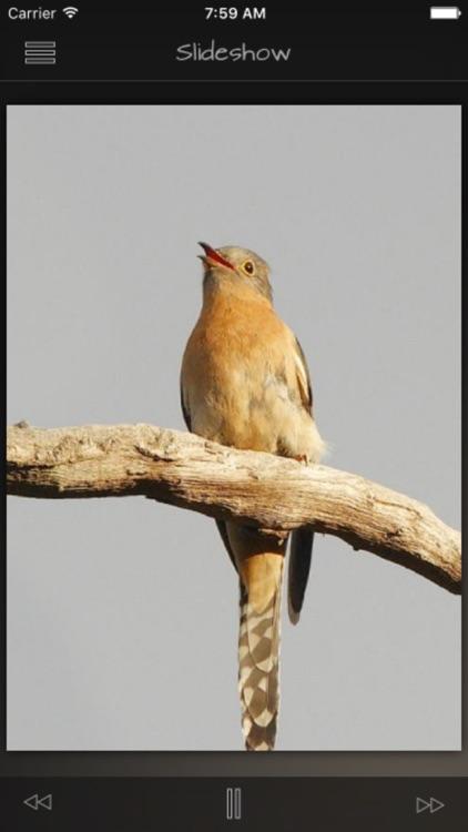 Cuckoos Database screenshot-3