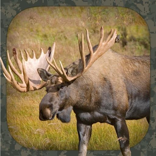 Moose Hunting Calls
