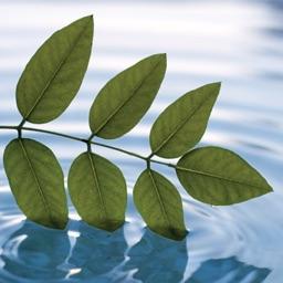 Meditation 1: Meditation for begyndere