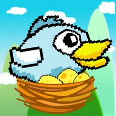 Activities of Bird to Nest HD
