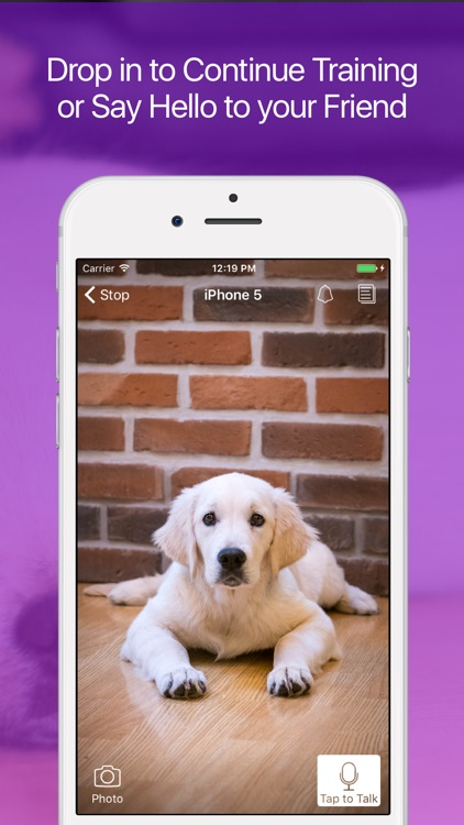 Pet Monitor: Dog and Puppy Camera
