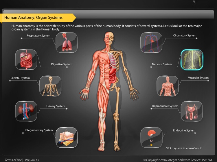 Human Anatomy Explorer Nervous System By Integra Software Services