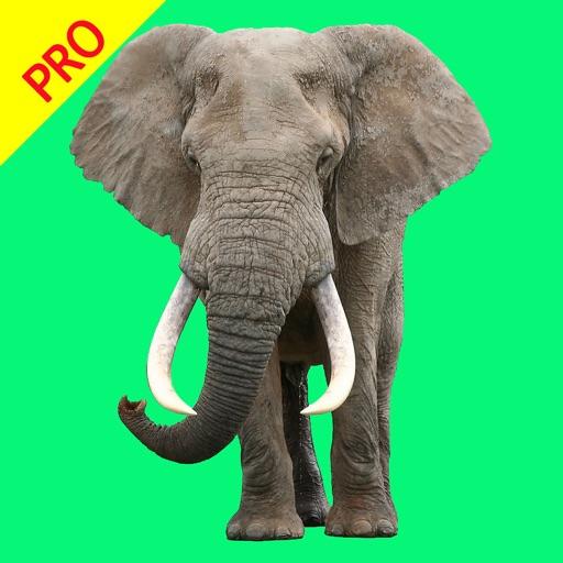 Animal Sounds Pro - Nature Voice Effects Simulator app logo