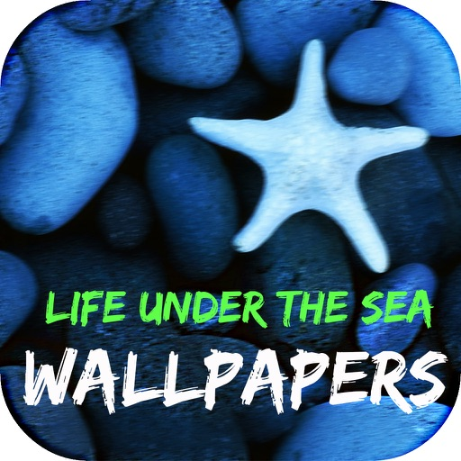 Life Under The Sea Wallpapers