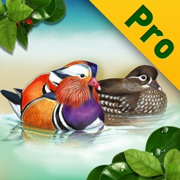 Birds of Korea PRO for iPad