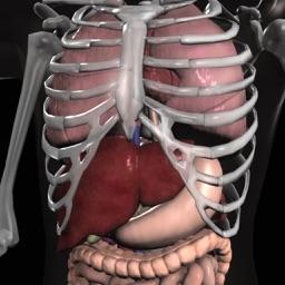 Anatomy 3D - Organs