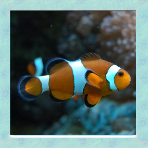 Clown Fish Simulator
