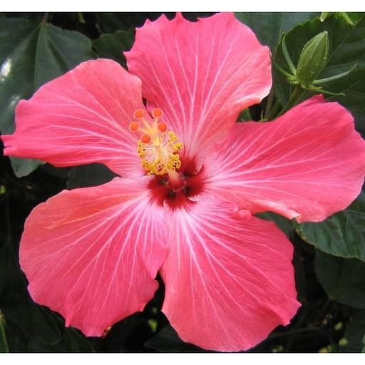 Flowers Picker