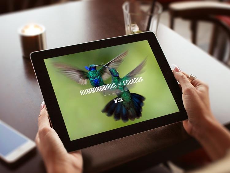 Hummingbirds of Ecuador screenshot-3