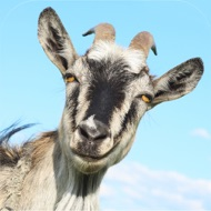 3D Goat Rescue Runner Simulator Game for Boys and Kids FREE