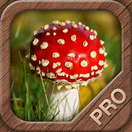 Mushrooms PRO - NATURE MOBILE - For Safe Enjoyment!