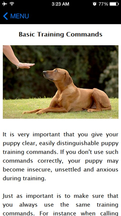 How To Potty Training A Puppy - Complete Guide
