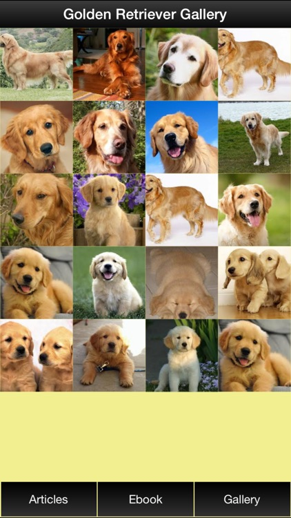 Golden Retriever Guide - Everything You Need To Know About Golden Retriever ! screenshot-1