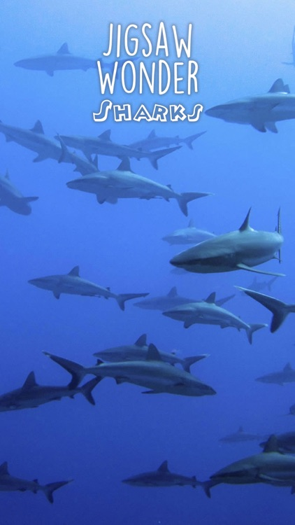 Shark Puzzles for Kids Jigsaw Wonder Collection screenshot-2