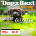 21.A Dogs Best Training Guide