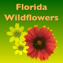 Wildflowers - Common Species of South Florida