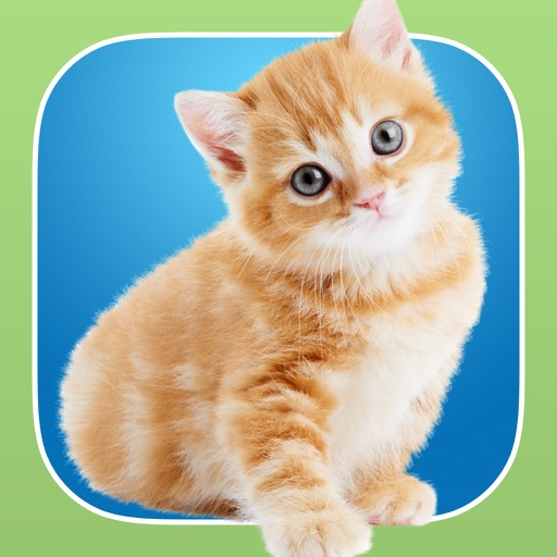 InstaKitty - A Funny Photo Booth Editor with Cute Kittens and Cool Cat Stickers for Your Pictures iOS App