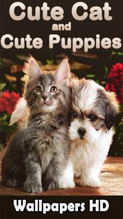 Best Cute Puppies and Cute Cat Wallpapers HD screenshot-4